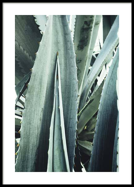 Agave Close Up Poster in der Gruppe Poster / Fotografien bei Desenio AB (10430)