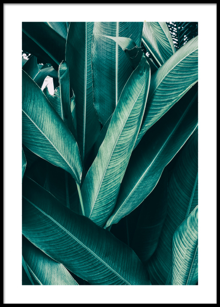 Tropical Leaves No1 Poster in der Gruppe Poster / Fotografien bei Desenio AB (10439)
