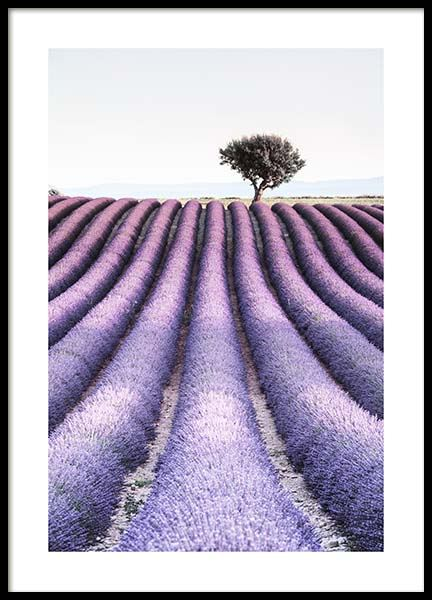 Provence Poster in der Gruppe Poster / Naturmotive bei Desenio AB (10462)