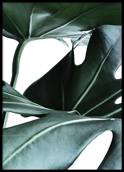 Big Monstera No.1 Poster in de groep Posters / Fotokunst bij Desenio AB (10736)