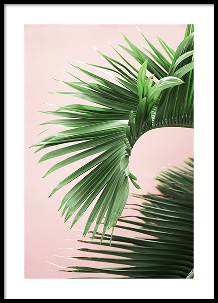 Pink and Green Palm No2 Poster in der Gruppe Poster / Fotografien bei Desenio AB (10856)