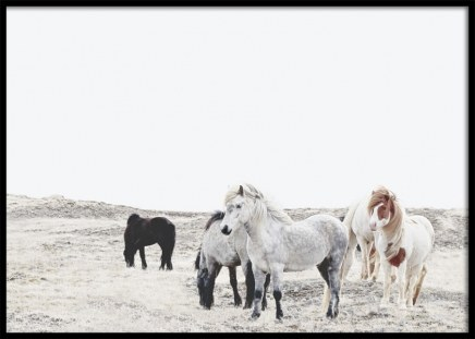 Wild and Free Horses Poster in der Gruppe Poster / Fotografien bei Desenio AB (11553)