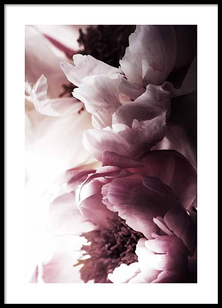 Dreamy Peony No2 Poster in der Gruppe Poster / Fotografien bei Desenio AB (11776)