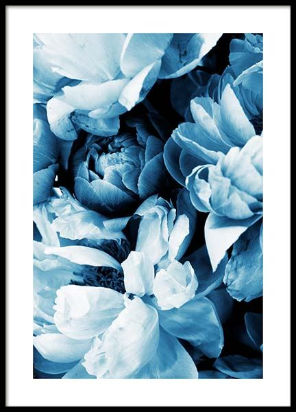 Blue Peony No2 Poster in der Gruppe Poster / Fotografien bei Desenio AB (11779)