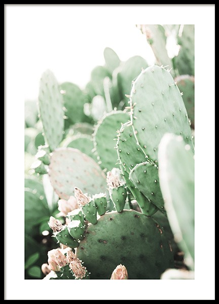 Prickly Pear Cactus Poster in der Gruppe Poster / Fotografien bei Desenio AB (11892)