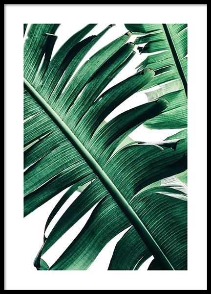 Banana Palm Leaves No2 Poster in de groep Posters / Fotokunst bij Desenio AB (12053)