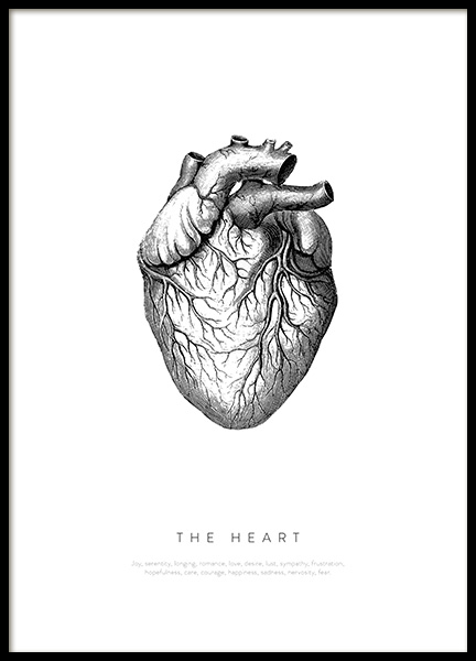 Anatomy of the Heart Poster in der Gruppe Poster / Illustration bei Desenio AB (13730)