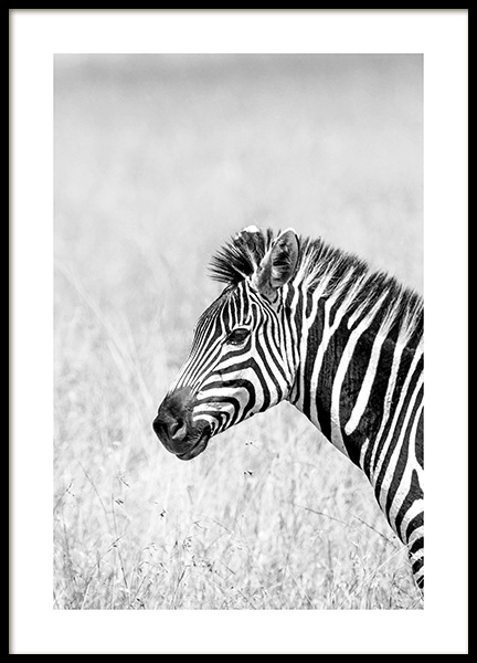 Zebra in the Grass Affiche dans le groupe Affiches / Insectes et animaux / Animaux sauvages chez Desenio AB (14582)