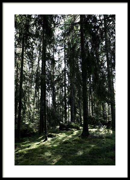 Forest Trees Poster in der Gruppe Poster / Naturmotive bei Desenio AB (2745)