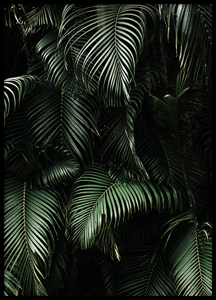 Dark Green Palm Leaves No2 Poster in der Gruppe Poster / Fotografien bei Desenio AB (3773)