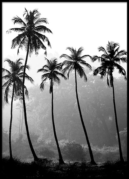Palm Trees, Poster in der Gruppe Poster / Naturmotive bei Desenio AB (8379)