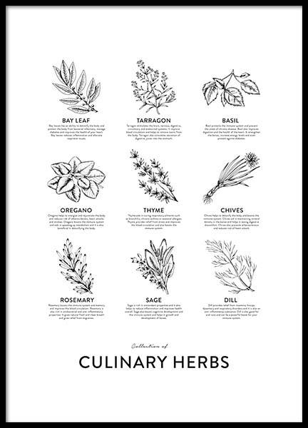 Collection Of Herbs, Affiches dans le groupe Affiches / Affiches cuisine chez Desenio AB (8595)
