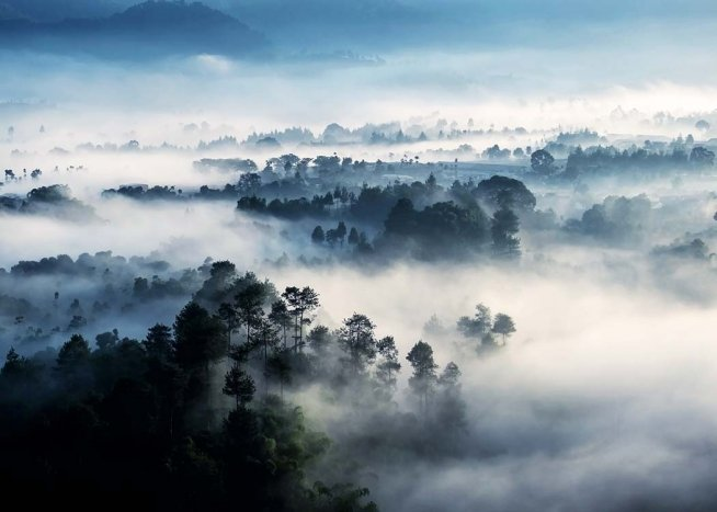 Misty Rainforest Poster / Naturmotive bei Desenio AB (10241)