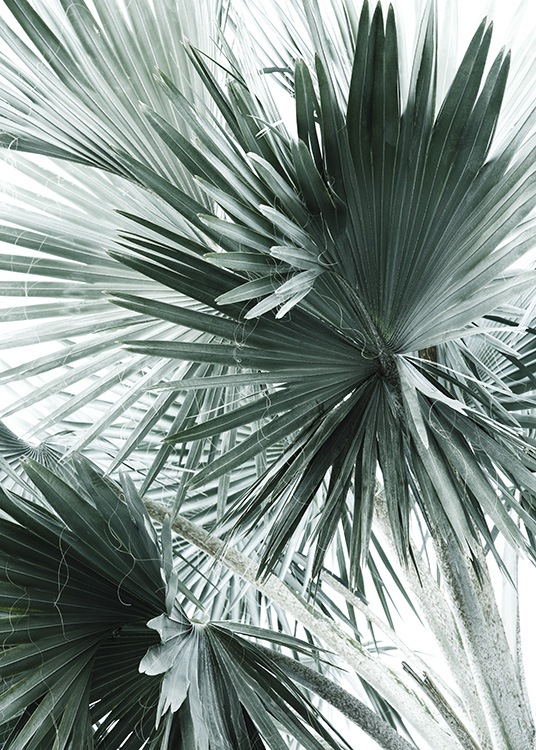 Tropical Palm Leaves No2 Poster / Fotografien bei Desenio AB (10980)
