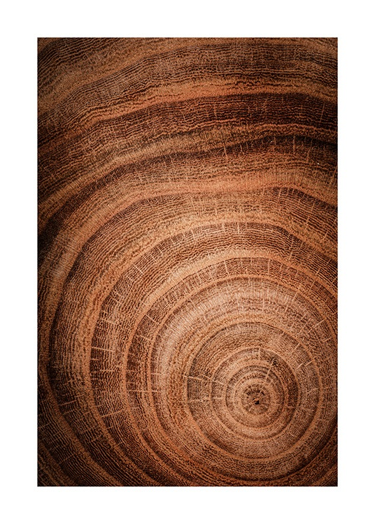 Growth Rings Poster / Naturmotive bei Desenio AB (11873)