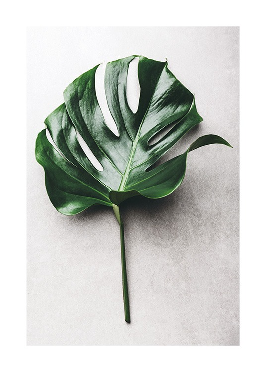 Green Monstera Leaf No1 Poster / Fotografien bei Desenio AB (12050)